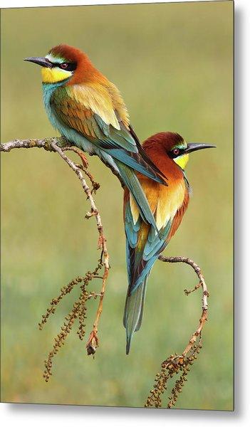 Bee-eaters In Love Metal Print