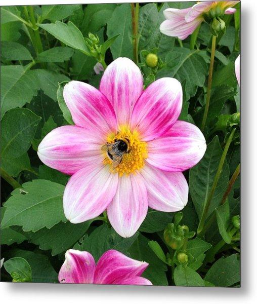 Bee Enjoying Flower Metal Print
