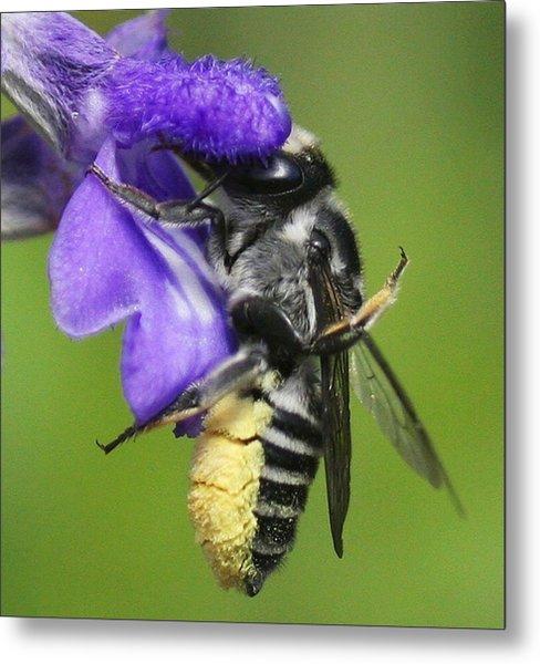 Bee-licious Flower Metal Print