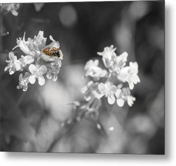 Bee On Black And White Flowers Metal Print