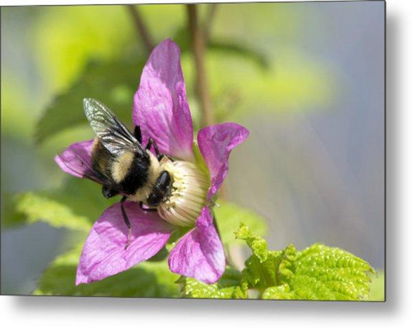 Bee On Flower Metal Print