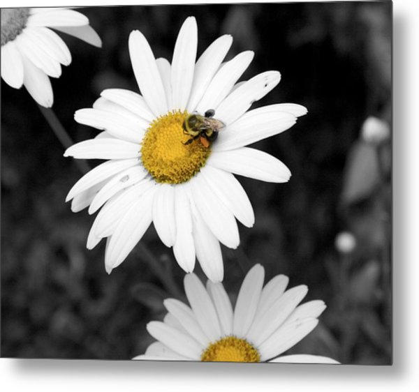 Bee On My Daisy Metal Print by Kimberly Elliott