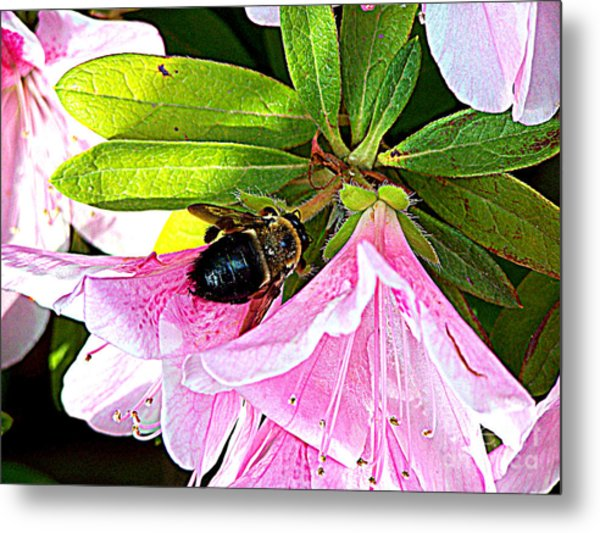 Bee On  Pink Azalea Metal Print