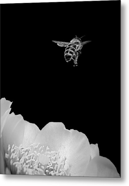 bee rising #2 B/W Metal Print