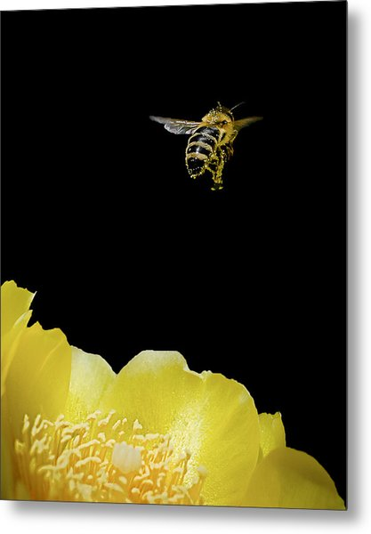 Bee Rising #2 Metal Print