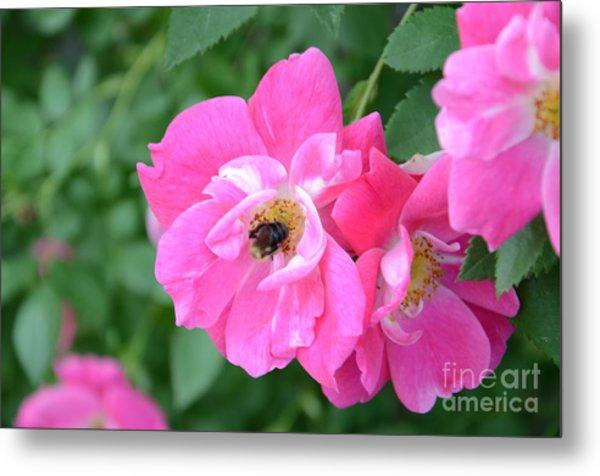 Bee Rosy Metal Print