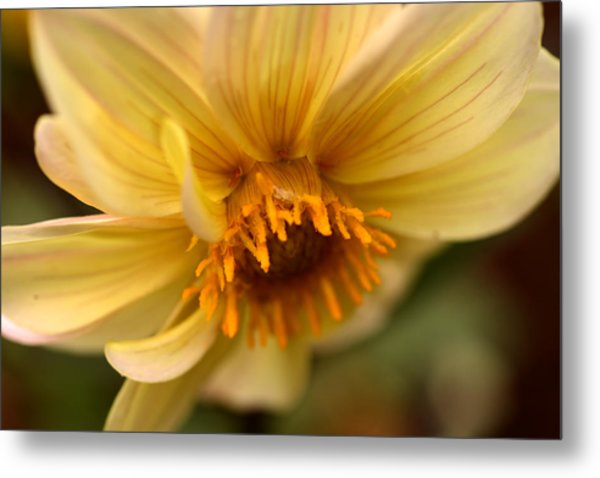 Bee Trap Metal Print