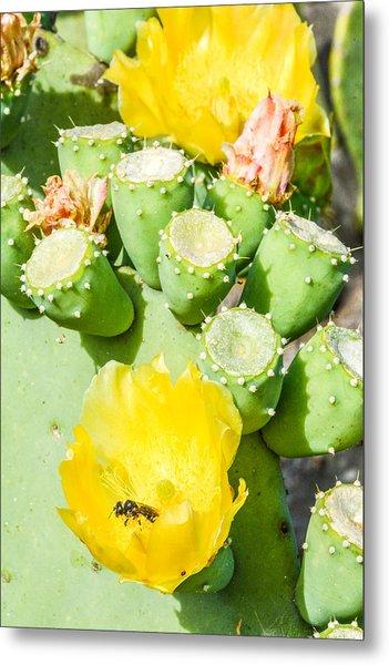 Bee Visits Cactus Blossom Metal Print by Wally Taylor