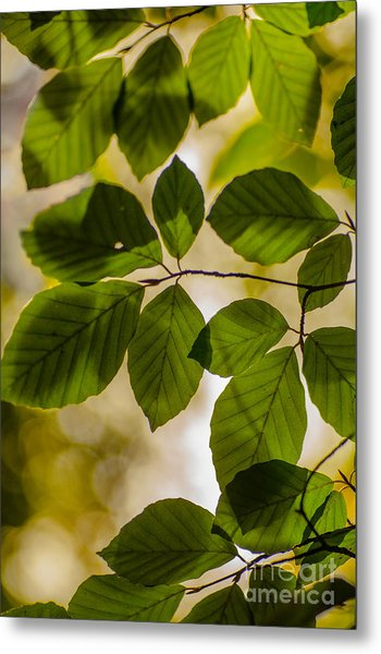 Beech Leaves And Bokeh Metal Print