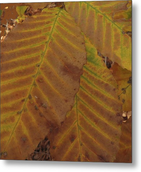Beech Leaves Metal Print