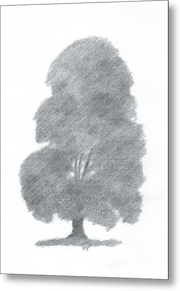 Beech Tree Drawing Number Four Metal Print by Alan Daysh