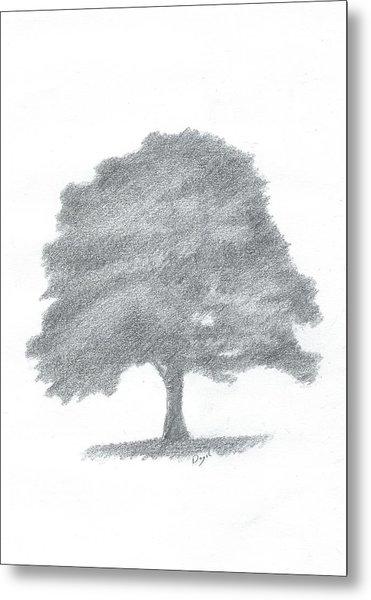 Beech Tree Drawing Number Three Metal Print by Alan Daysh