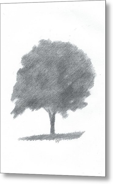 Beech Tree Drawing Number Two Metal Print by Alan Daysh
