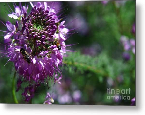 Bees In Purple Metal Print