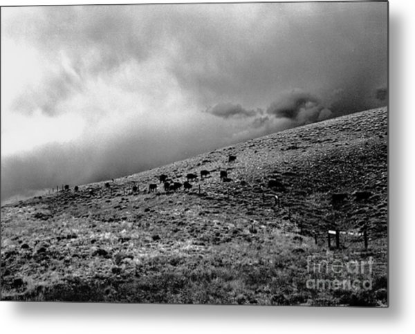Before The Storm Metal Print by Susan Chandler