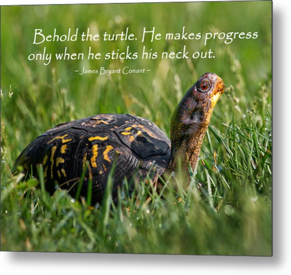 Behold The Turtle Metal Print