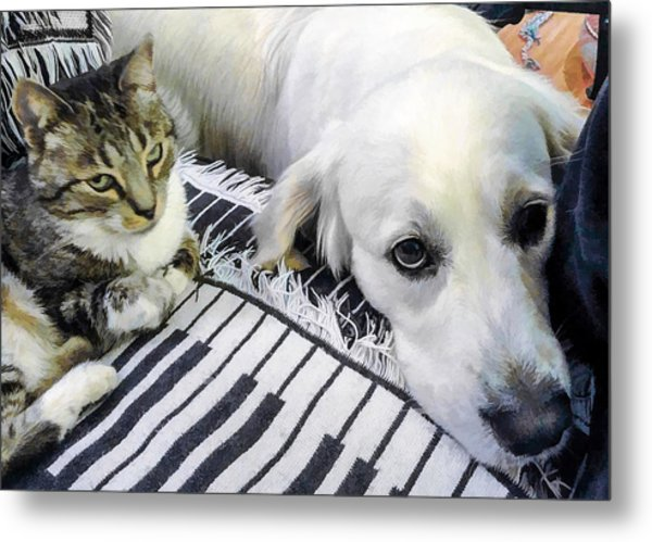 Bella And Peroni Metal Print