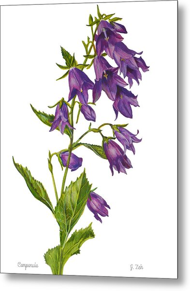 Bellflower - Campanula Metal Print