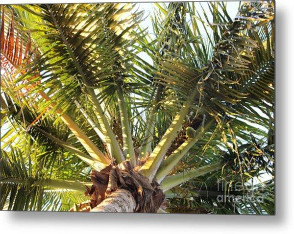 Below A Palm Tree Metal Print