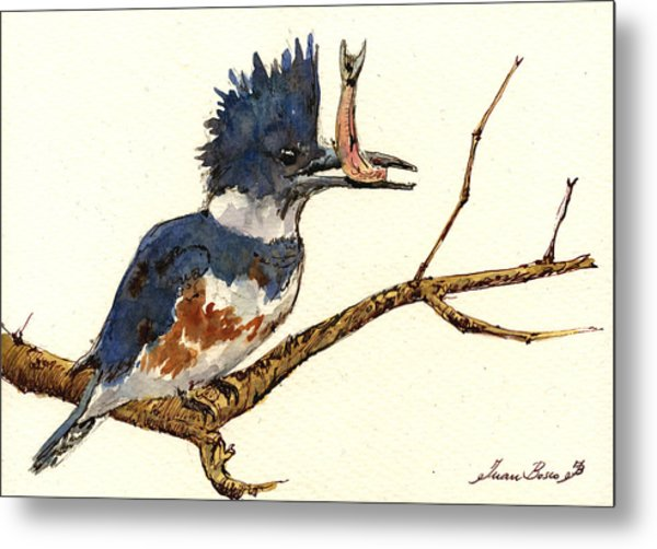 Belted Kingfisher Bird Metal Print by Juan  Bosco
