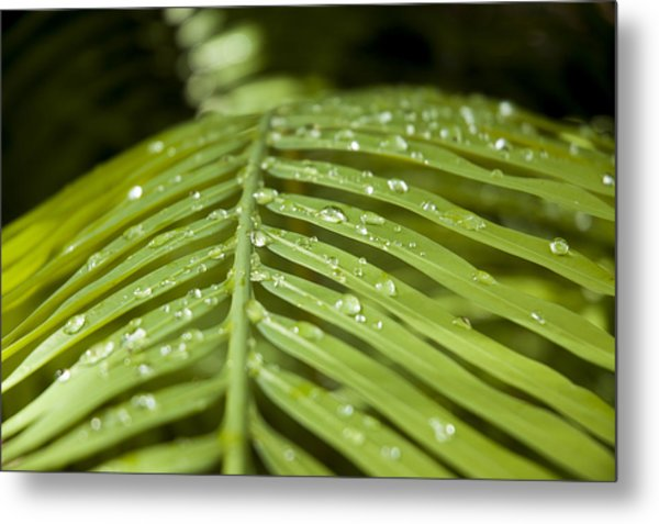 Metal Print featuring the photograph Bending Ferns by Carolyn Marshall