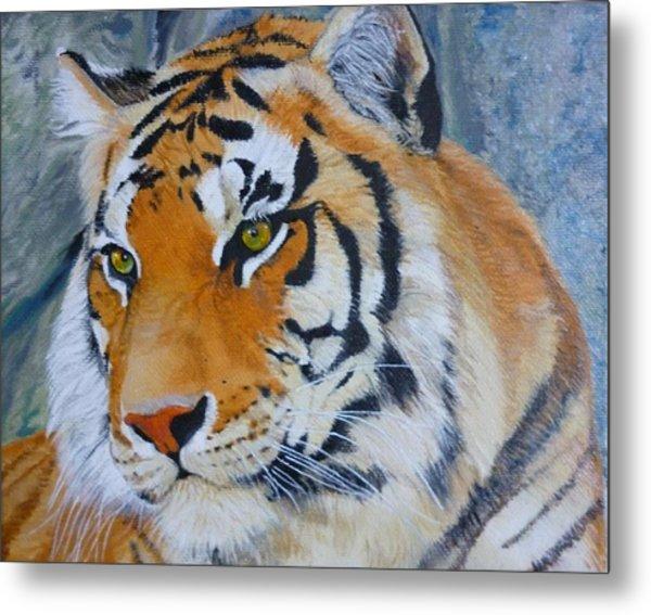 Bengal Tiger Original Oil Painting By Pigatopia Metal Print