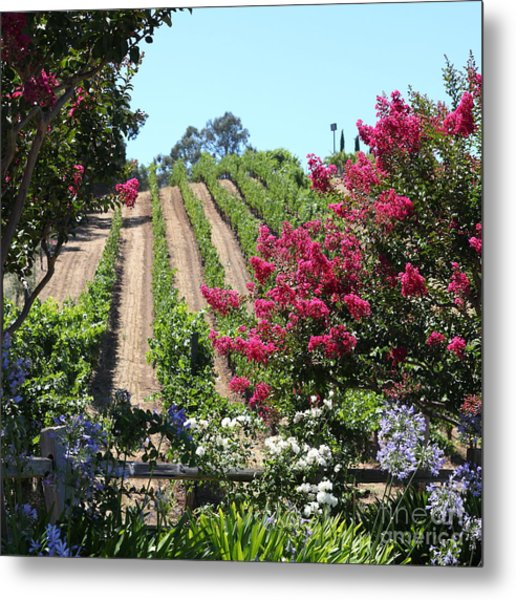 Benziger Winery In The Sonoma California Wine Country 5d24495 Square Metal Print