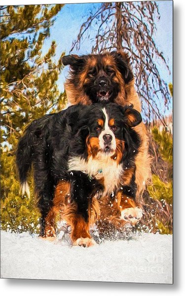 Bernese Mountain Dog And Leonberger Winter Fun Metal Print