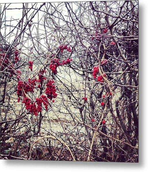 Berries In The Hedgerow Metal Print
