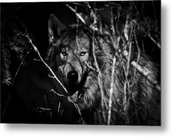 Beware The Woods Metal Print