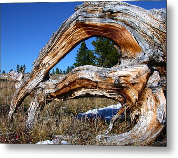 Beyond Our Roots Metal Print