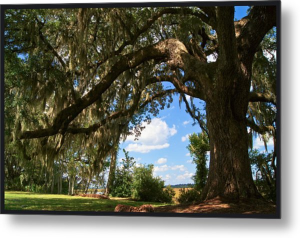 Beyond The Oak                      Metal Print