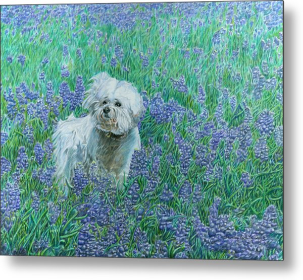 Bichon In The Bluebonnets Metal Print