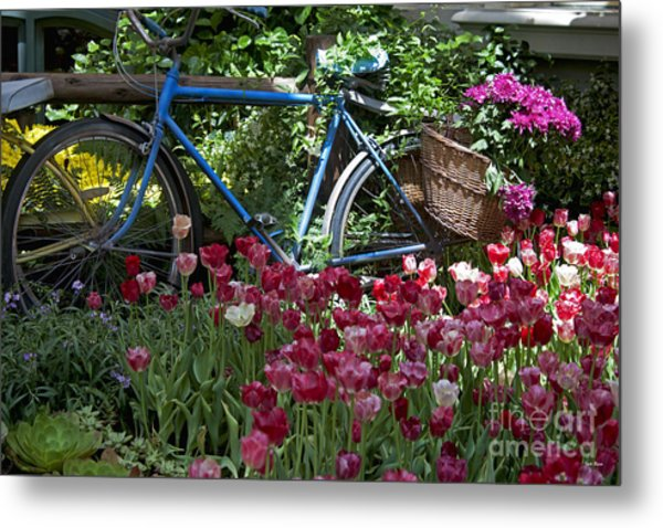Bicycle In My Garden Metal Print