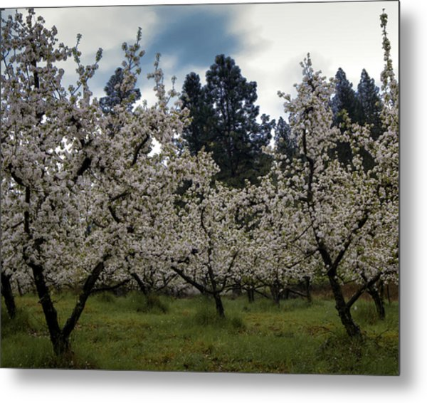 Big Apple Blossoms Metal Print
