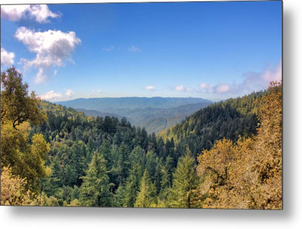 Big Basin Redwoods Metal Print