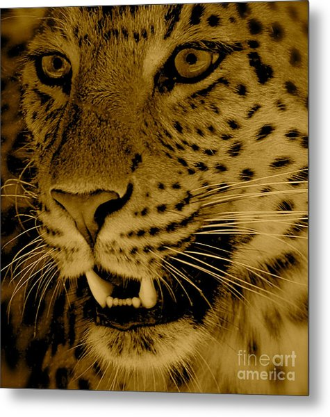Big Cat In Sepia Metal Print