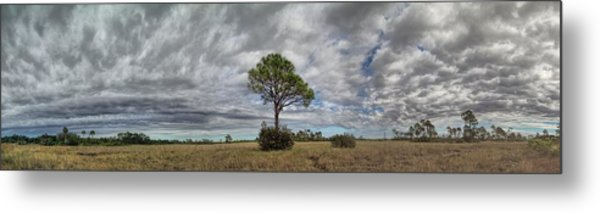 Big Cypress Metal Print