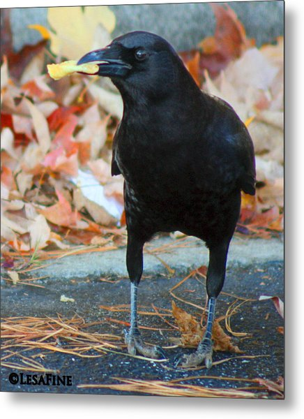 Big Daddy Crow Leaf Picker Metal Print