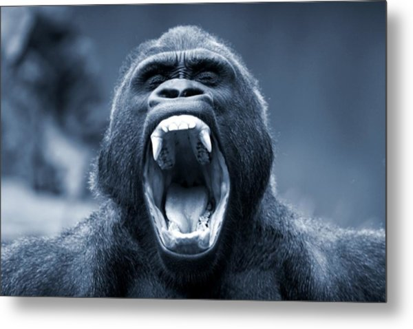 Big Gorilla Yawn Metal Print