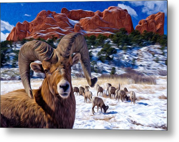 Big Horn Sheep At The Garden Metal Print