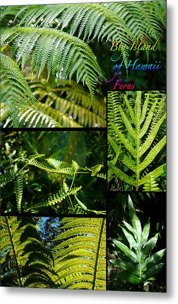 Big Island Of Hawaii Ferns 2 Metal Print by Colleen Cannon