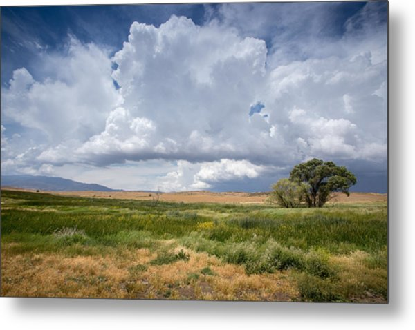 Big Sky And Tree Metal Print