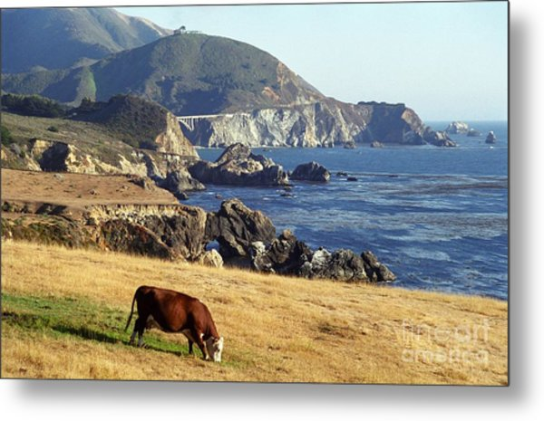 Big Sur Cow Metal Print