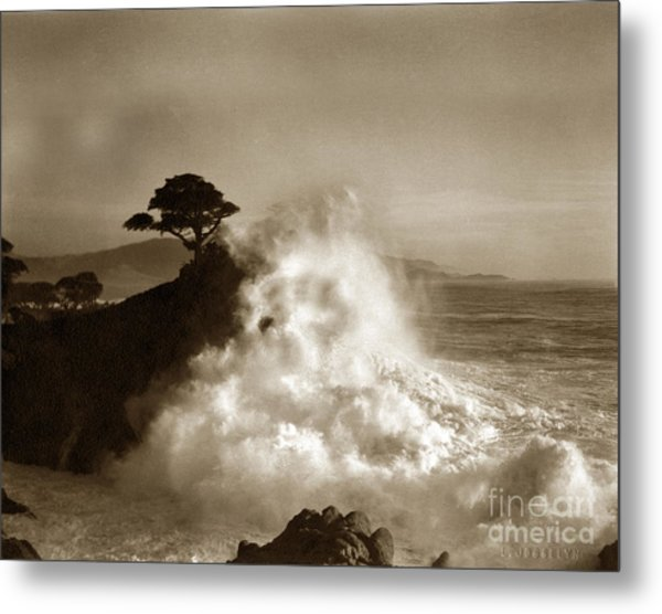 Big Wave Hitting The Lone Cypress Tree Pebble Beach California 1916 Metal Print