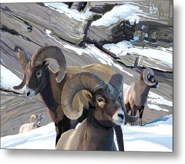 Bighorn Rams Metal Print