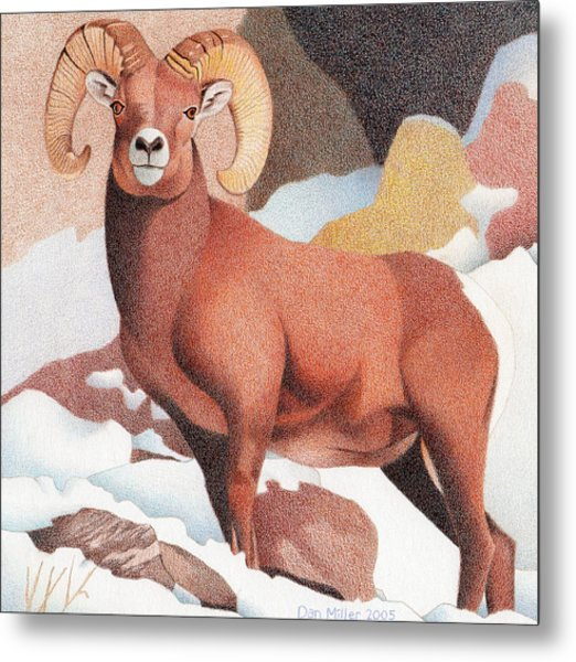 Bighorn Sheep Winter Metal Print