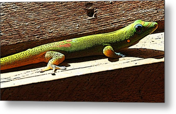 Binky The Gecko Metal Print by Colleen Cannon