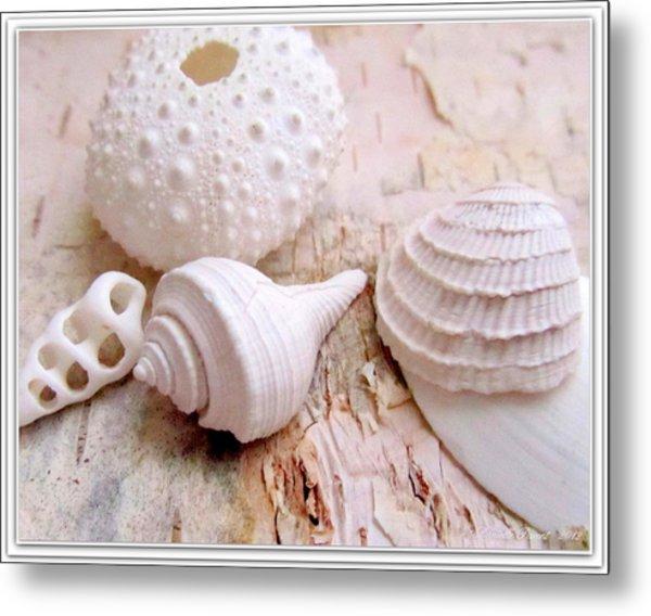 Birch And Shells Metal Print