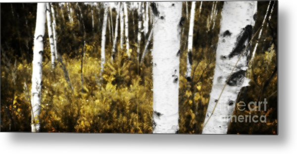 Birch Forest I Metal Print